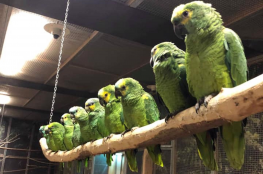 Łódź Atrakcja Papugarnia Carmen